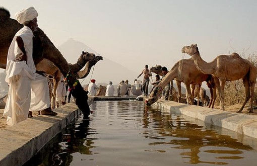 Camel Watering Center