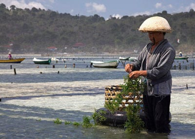 Aquaculture Farming