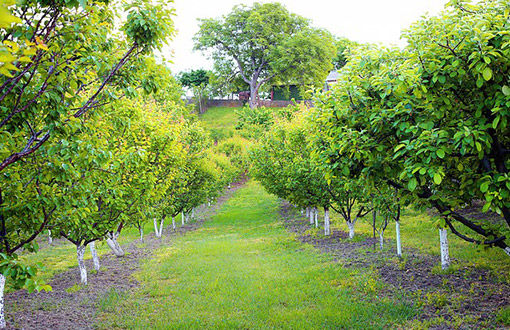 Irrigation System for Orchard